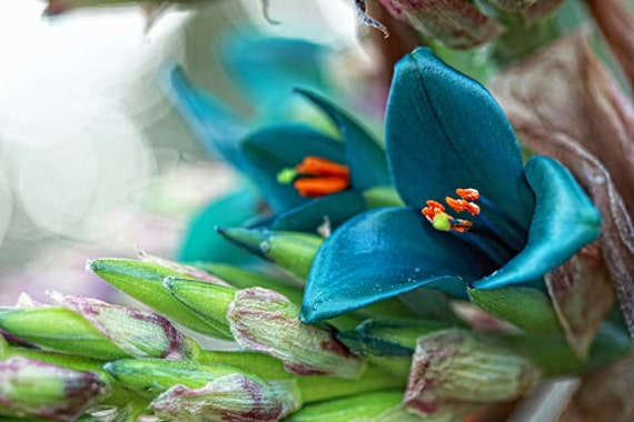Flower Photography Garden photography Macro photography turquoise green wall art spring decor flower home decor Fine Art Photography Print