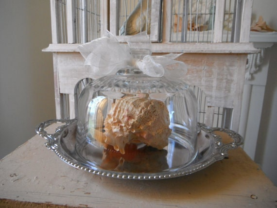 nautical shell display  glass cloche display silvertone tray French country cottage decor candle holder