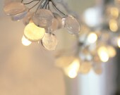 Snow Drops glass fairy lights - redbrickglass