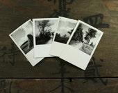 "Four Vintage Photos ""Nature's Walk"", Photography, Paper Ephemera, Snapshot, Old Photo, Collectibles - FT011"