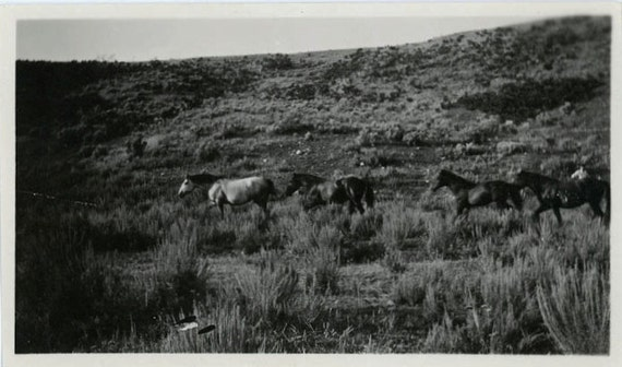 "Vintage Photo ""Wild Horses"", Photography, Paper Ephemera, Snapshot, Old Photo, Collectibles - 0011"