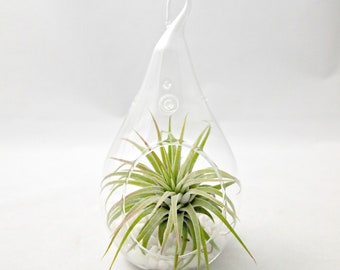 Small Droplet Air Plant Terrarium // Choose Your Sand or Gravel Colors