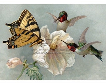 Hummingbird Butterfly Print - Ruby Throated and Swallowtail on Hibiscus Flower