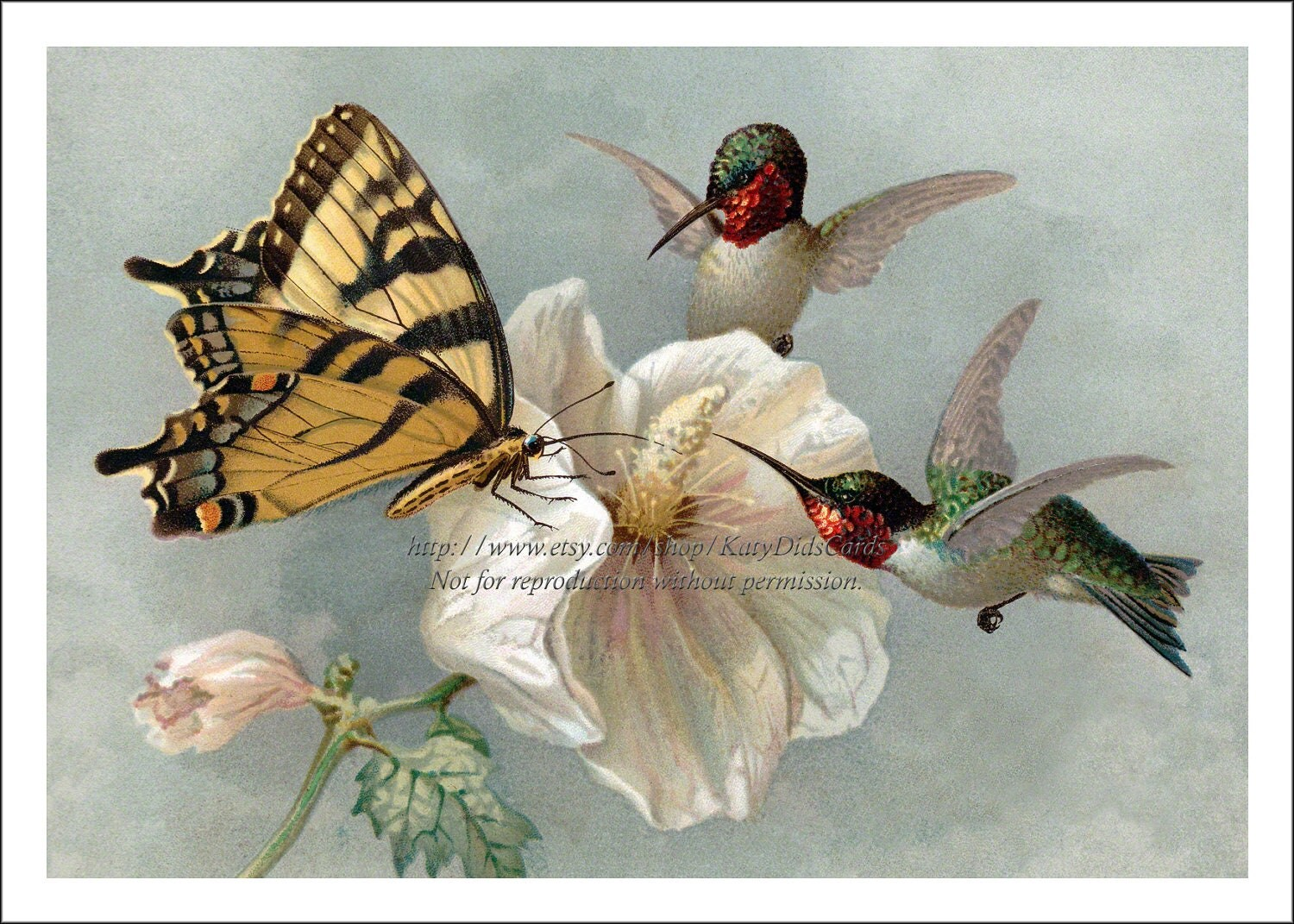 Hummingbird Butterfly Print Ruby Throated And Swallowtail On