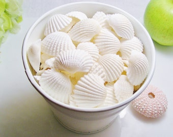 Small White Ark Clam Shells  (approx 4.5oz  or 9 oz bag) Choose size at checkout
