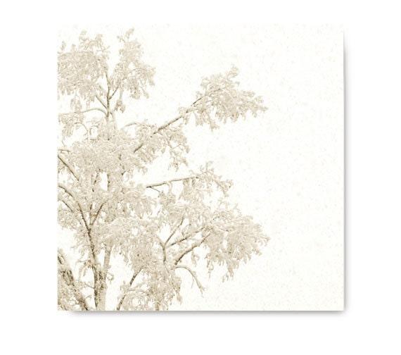 Winter Snow Tree Landscape, photo, winter, white, dramatic, grey, soft, snowy tree, monotone, sepia, storm, freeze, ice, snowy scene