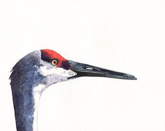 Sandhill Crane Painting -Wildlife bird art -  Print of Watercolor Painting A4 print wall art print - bird art - art print - wildlife print