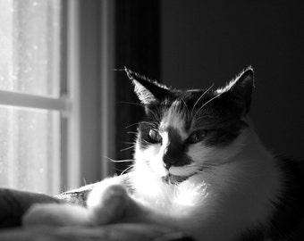 Cat Photo--Chillin'--8x10 black and white print