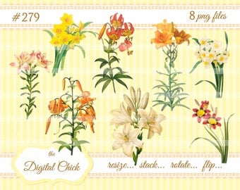 Digital Clipart, instant download, Vintage Easter Lily Images, Clip Art--Tiger Lily Daffodil Narcissus, lilies printable PNG files   279