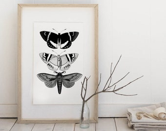 Butterflies, summer time, home decor,  Digital Image Download Sheet, Transfer To Pillows ,Burlap Bag, or Print on paper 014