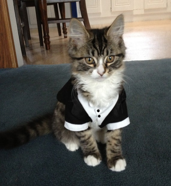 items similar to custom cat dog wedding tuxedos on etsy