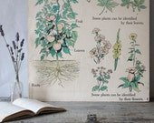 Vintage Double-Sided School Poster, Plants & Animals
