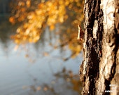 Yellow autumn leaves, Water reflection, tree bark print, Autumn photography, Fall Foliage print, Nature photography, Dreamy bokeh print