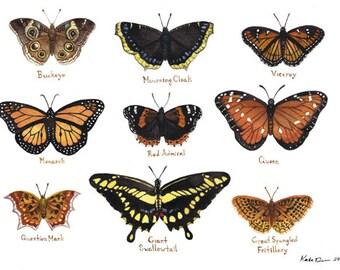Butterflies Field Guide Classification Chart Watercolor Art Print
