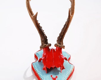 "Stylish wall sculpture, deer antler with scull, deer scull, deer mount, wall decoration, antler hook, antlers,  ""Isolde"""