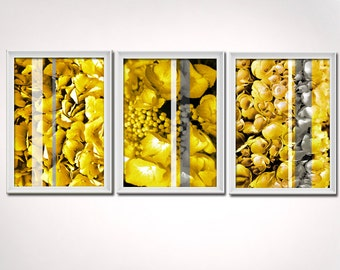 Yellow Gray Grey Fine Art - Hydrangea Prints - Photo Yellow Grey Gray Wall Art , (3) 8x10 piece set - Shipping Included w/in Cont. US