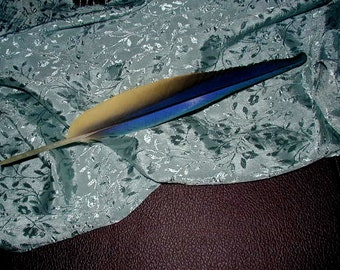 Craft Supply - 1 Parrot/Macaw Feather - Choose your size - up to 12 inches Long