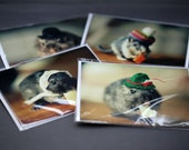 Greeting Card Set Gerbils In Hats Folded Photo Note Cards With Envelopes (4)
