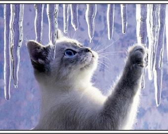 4 Kitten Cat  Santa Christmas Cat Kittens Holiday Greeting Notecards/ Envelopes Set