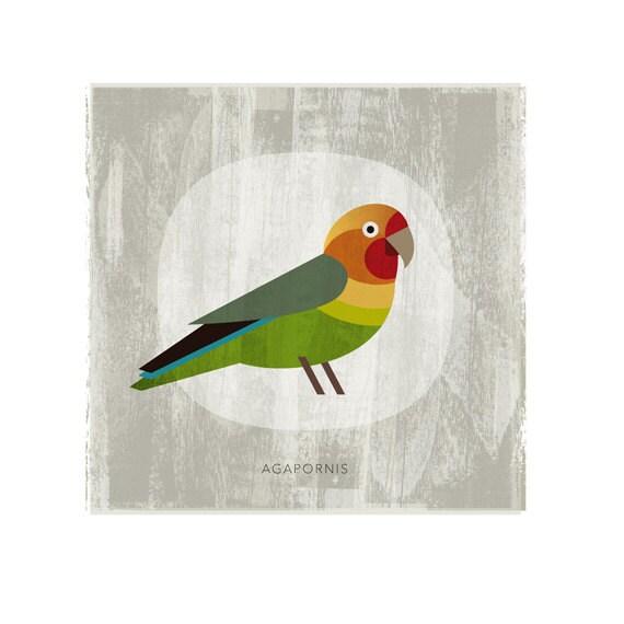 Agapornis colored bird - Digital Image Download poster print - printable