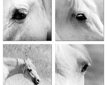 Black and white horse photography set - horse in black and white equine black eyes white horse high key nature photography 5x5 inches