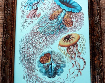 Jellyfish Art Print from 1904 on Blue Cardstock