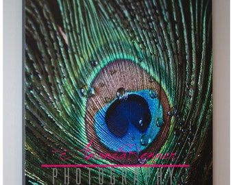 Fine Art Photography - 16x20 Canvas Gallery Wrap - Peacock Feather with Water Drops