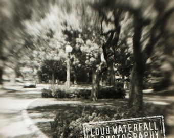 Ethereal Landscape, South Pasadena, Soft Focus - 8x10 Fine Art Photograph