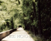 """Nature Photography Print - Trees Overhang Cement Path- Fine Art Photograph - Woodland  Print - Wall Art - """"Trees & Concrete"""""""