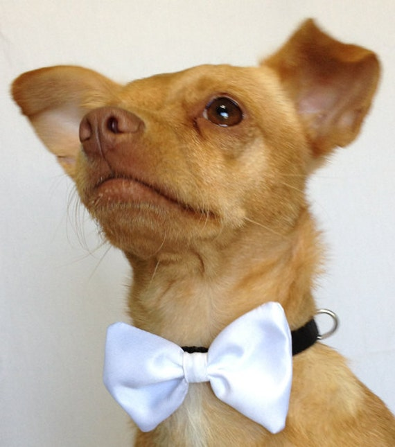 White Satin Bow Tie for a Dog or a Cat