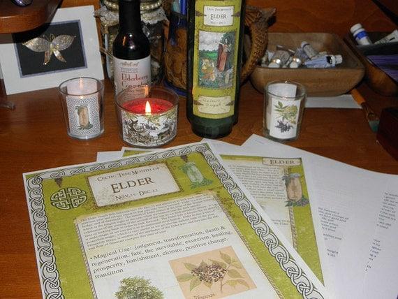 Celtic Tree Calendar Series: Elder Month Nov.25- Dec.22