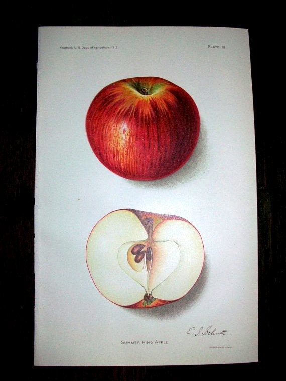 Antique Print 1912 Summer King Apple by E. I. Schutt These Look Great Framed I Have Several