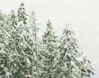 Winter Photography, Christmas Home Decor, Snow Wall Art, Green and White Ski Lodge Art, Forest Photograph