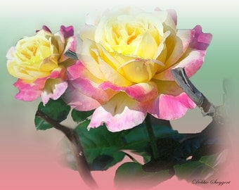 From My Rose Garden Note cards