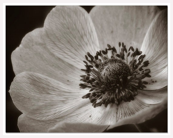 Items Similar To Black White Botanical Print, Flower Bathroom Art,  Botanical Photograph, Fine