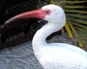 Ibis White 12 in. waterbird sculpture