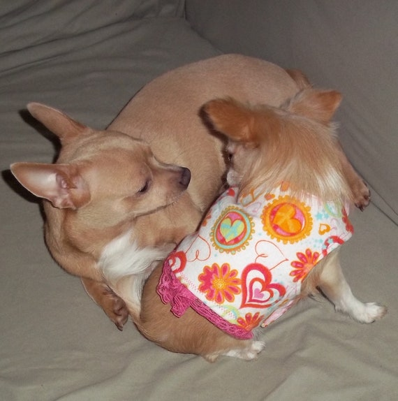 x-small to small dog coat