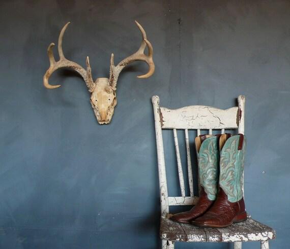 Vintage Deer Skull with Antlers