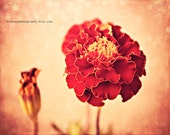 ON SALE -Peach Photo, Red Flower Soft Pastel Texture Dreamy Bokeh Photo Fine Art Photography Baby Nursery Wall Decor Cottage Chic