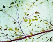 blue, green, teal, brown, sky, summer, tree, fine art photography