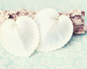 Beach Photography - Sea Life Photograph - Shell Photo - Beach Cottage Decor - Shells - Fine Art Photography Print - White Aqua Beach Decor