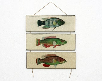"Retro Wood Wall Art 14x12"" 36x30 cm, Fish Educational Board, Natural History, Wall Hanger, Art Deco Room Decor, Nautical, Nursery room art"