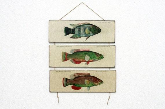 "Retro Wood Wall Art 14x12"" 36x30 cm, Fish Educational Board, Natural History, Wall Hanger, Art Deco Room Decor, Nautical, Nursery room art"