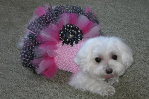 Pink & Black LEXI Dog Tutu Dress with Tulle