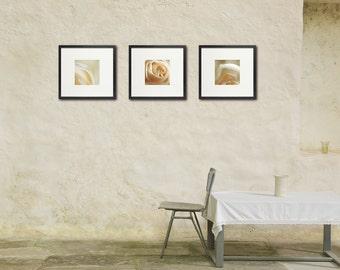 White Rose Photo Set, Wedding Decor, Romantic Wall Art, Floral Photography, Nature Photography, Wedding Photos