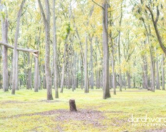 Black Walnut Forest