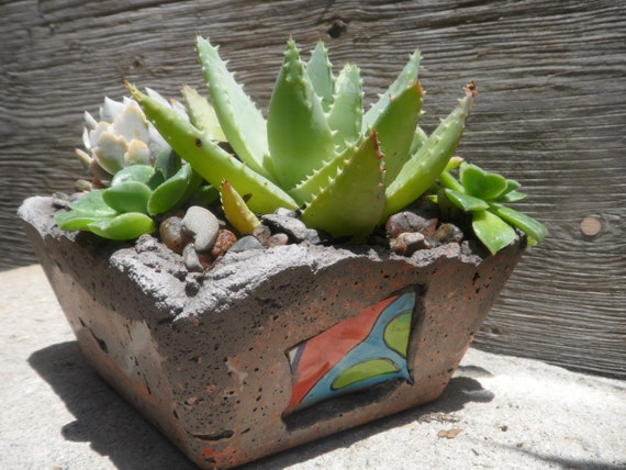 Colorful succulent garden in rustic hand created cement planter