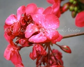 Pink Flower Photo - Fine Art Flower Print, Water Droplets Photograph - La Fleur Rose, Cards also available