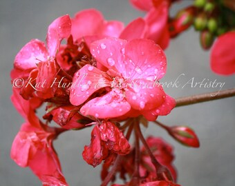Pink Flower Photo - Fine Art Flower Print, Water Droplets Photograph - La Fleur Rose, Cards also available