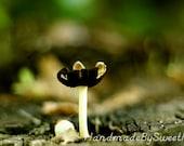 Wild Mushrooms, Green, Brown, Outdoors, Single, Nature, Macro, Fine Art, Home Decor, Photography